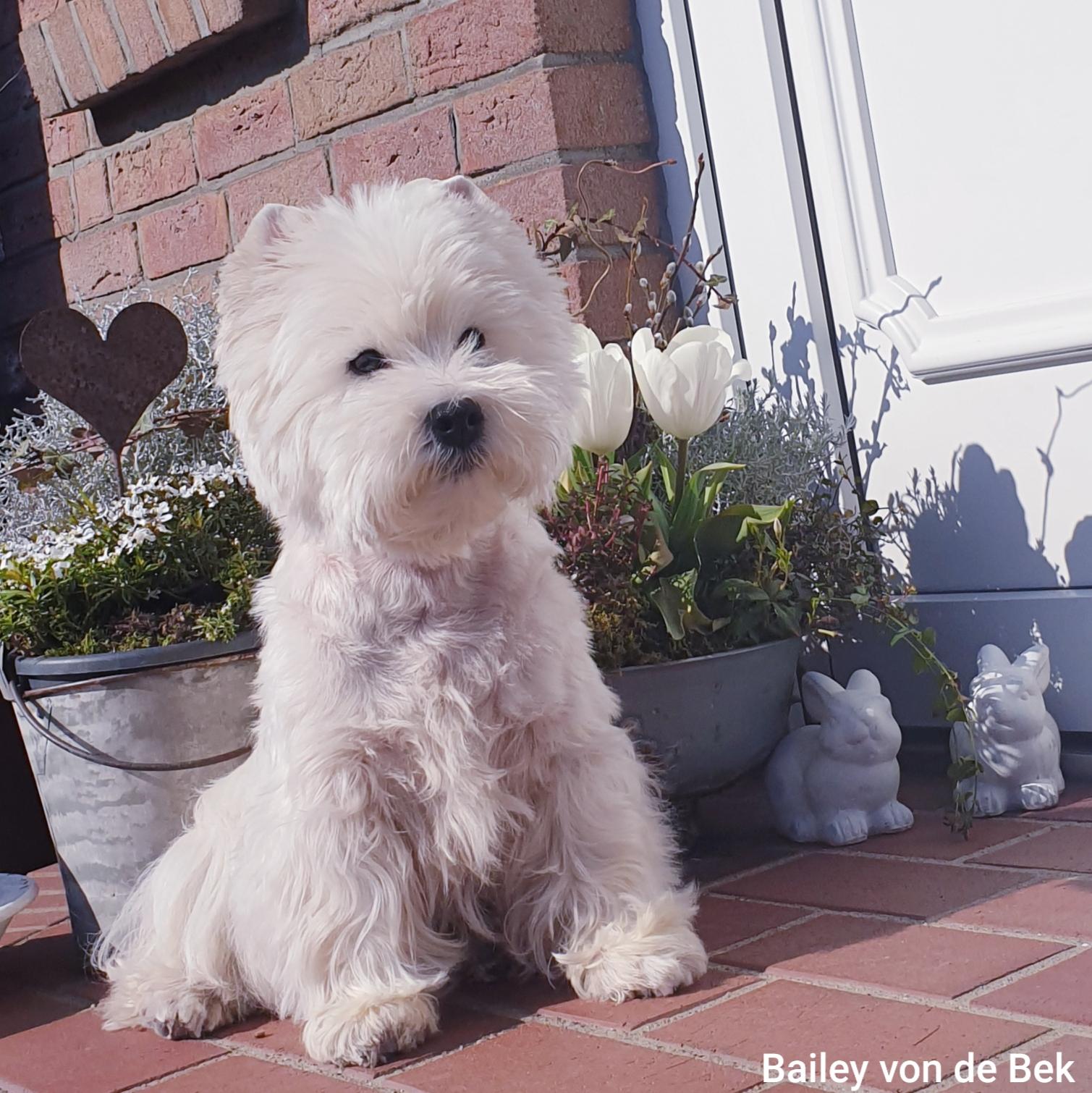 Bailey im März 2020