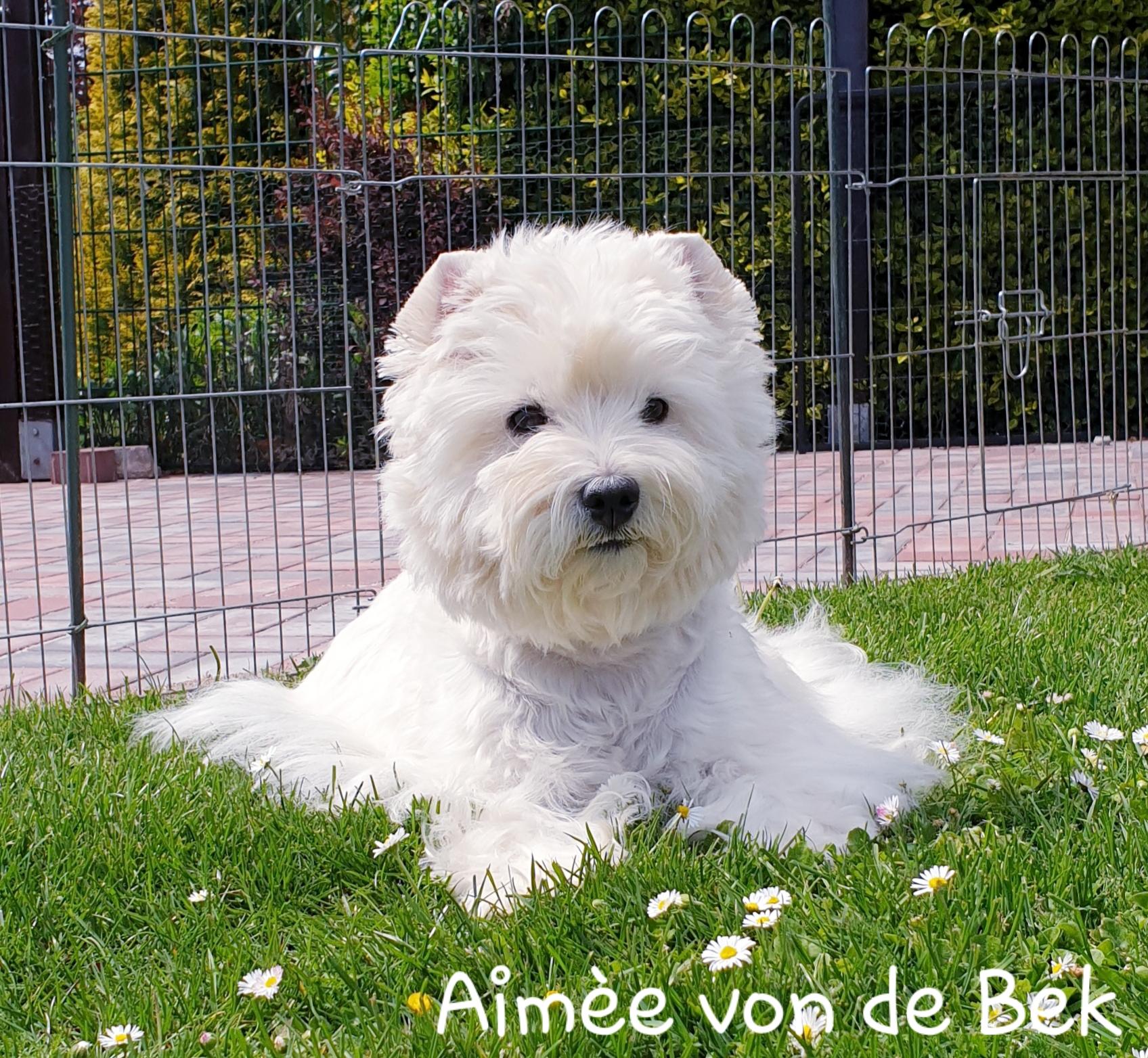 Aimée von de Bek 07/2019