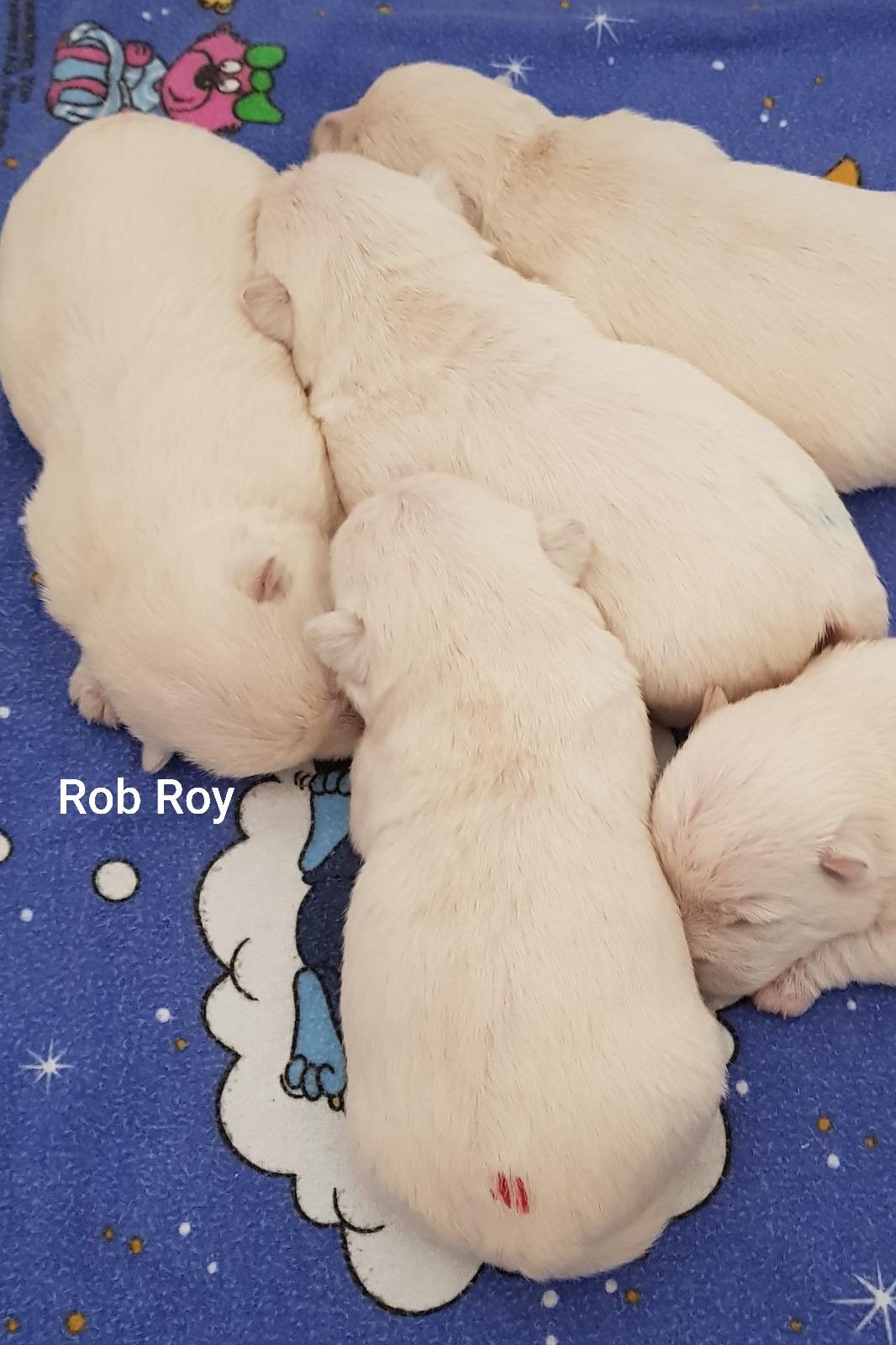 Rob Roy ganz links außen