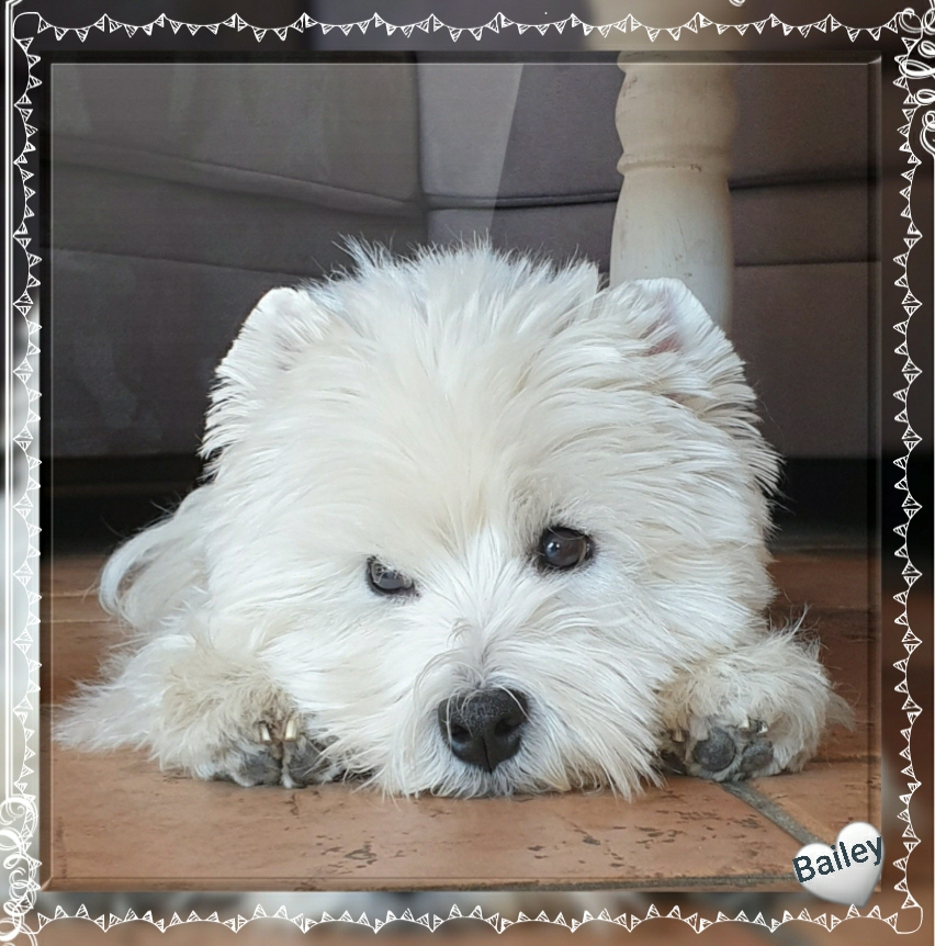Am 11.06.2020 wurde Bailey 10 Jahre alt