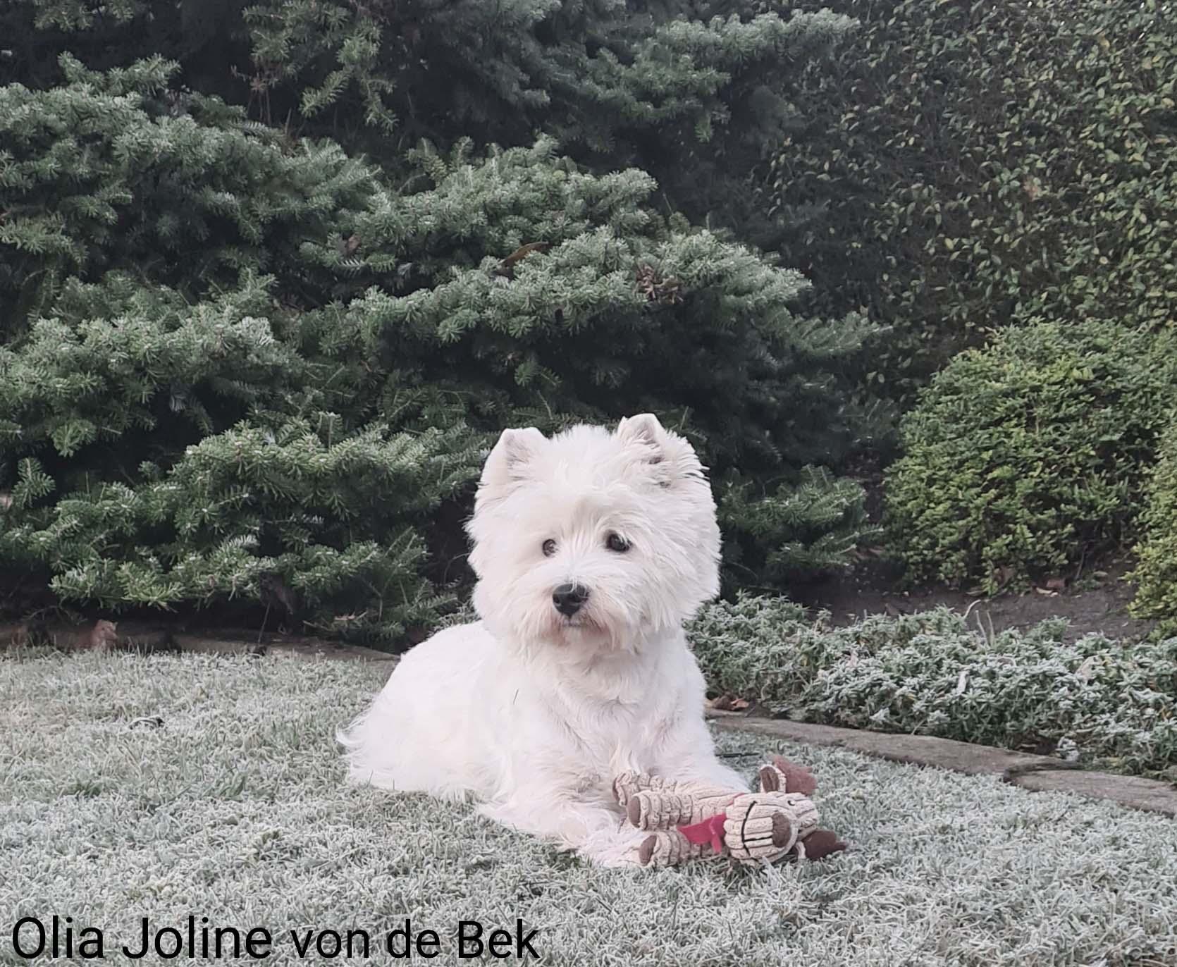 Olia Joline 01/2021