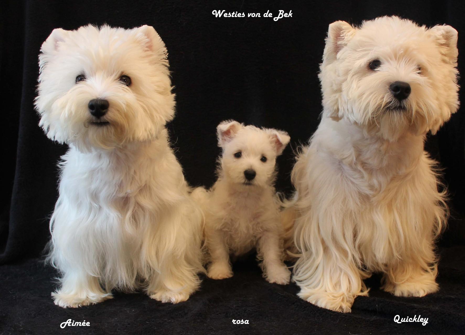 Hündin rosa 8 Wochen alt mit Aimée und Quickley