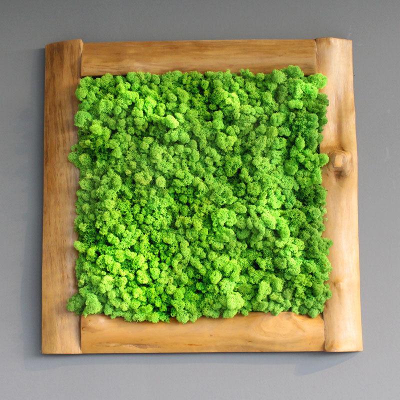 Kaufen moosbild islandmoos nature art i famoos for Moos bilder