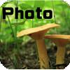 【photo】キノコの写真