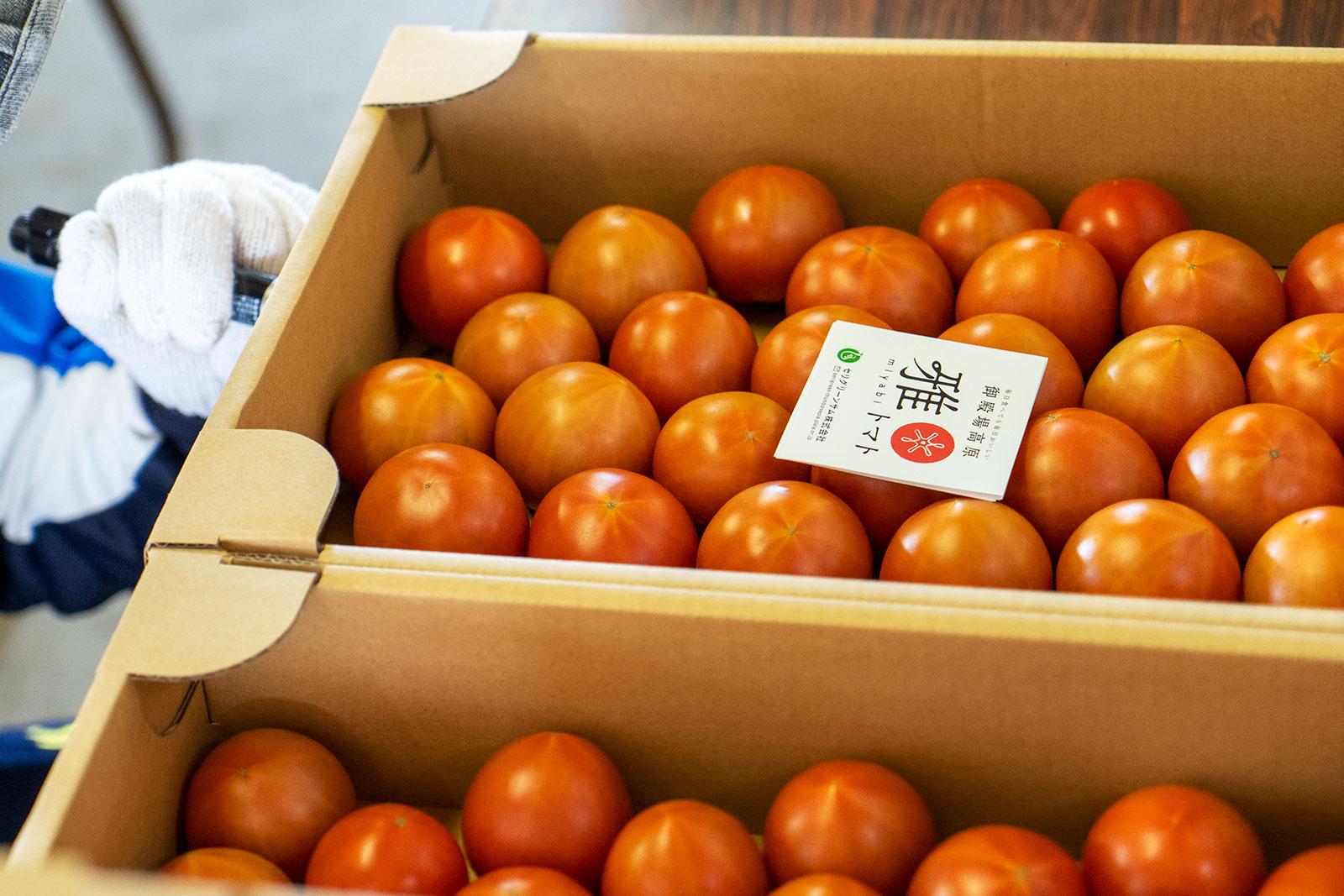 神奈川県での雅トマト販売情報です!