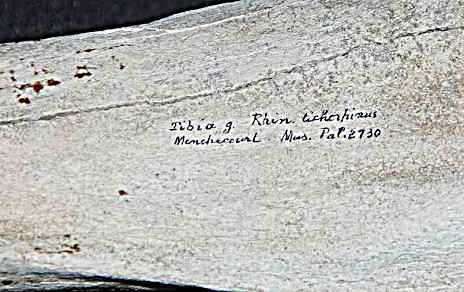 Tibia gauche de rhinocéros laineux (détail) /Photo Y. F.