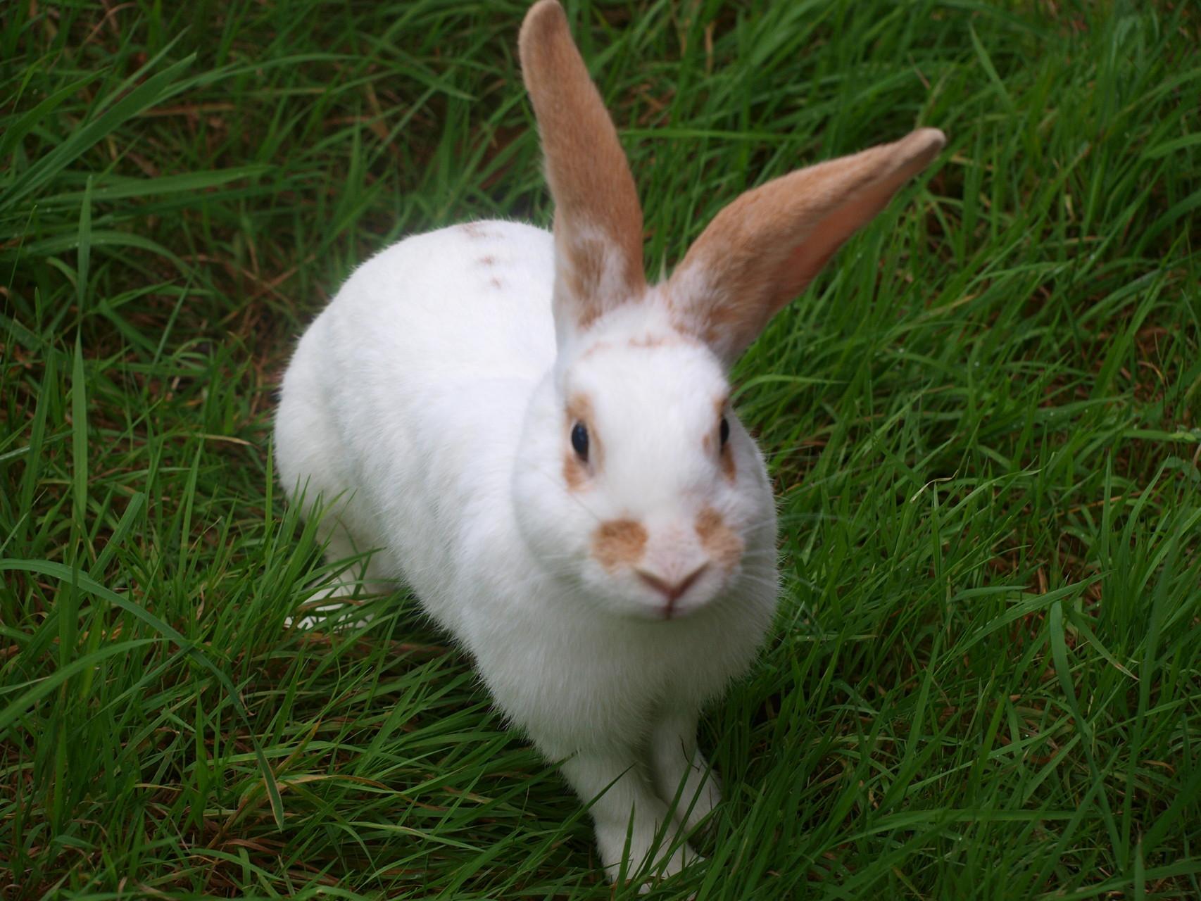Betty unser Kaninchen