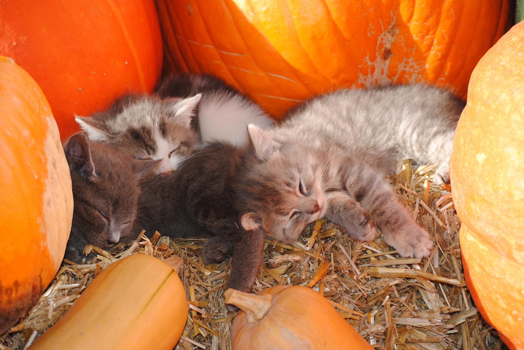 Die kleinen Katzen geniessen die Herbstsonne.