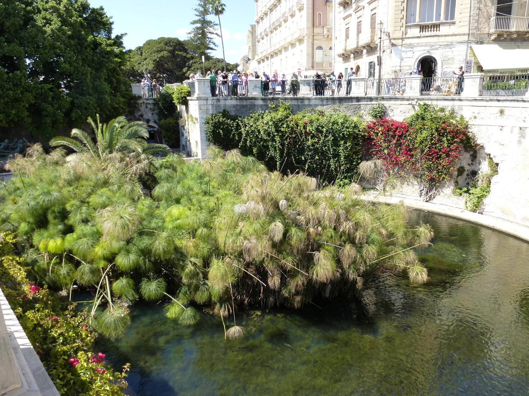 Fountain of Arethusa Ortigia Island