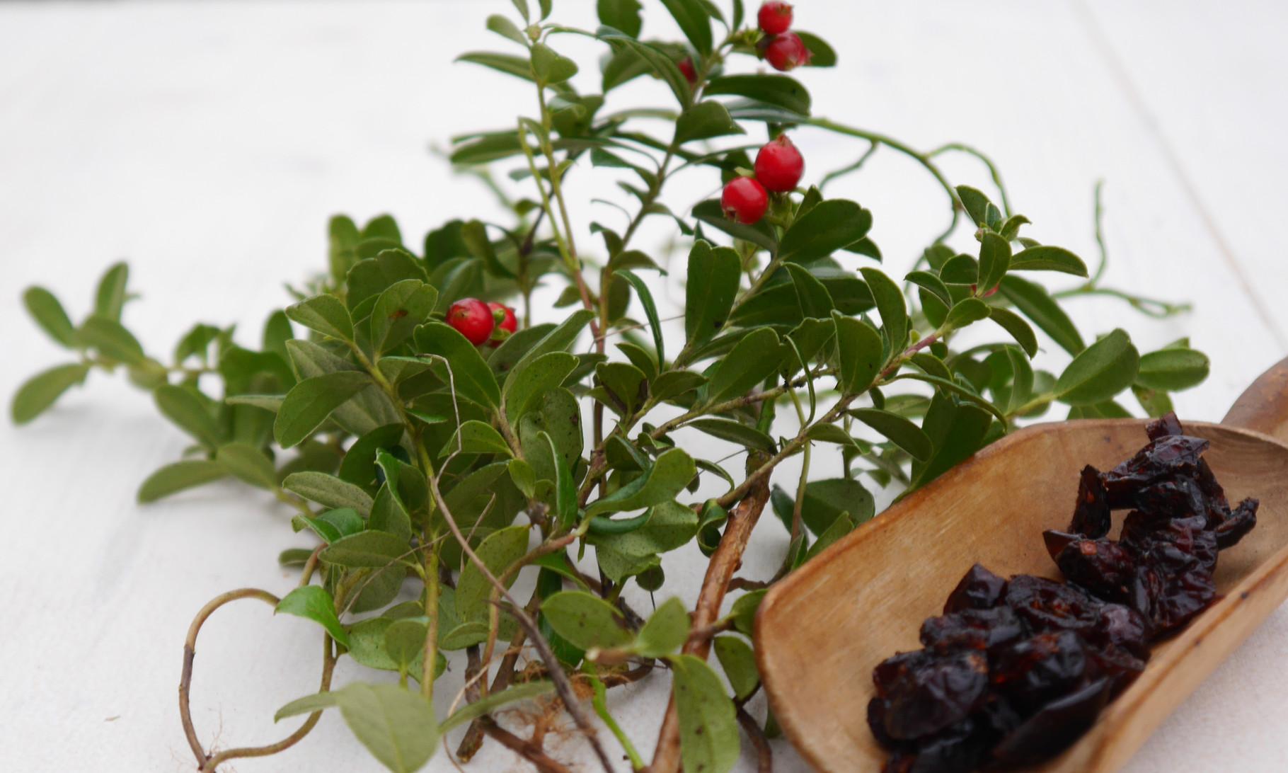 Preiselbeeren, Cranberrys: herb-fruchtig