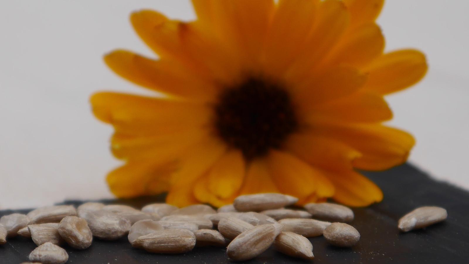 Sonnenblumenkerne: nussig geröstet