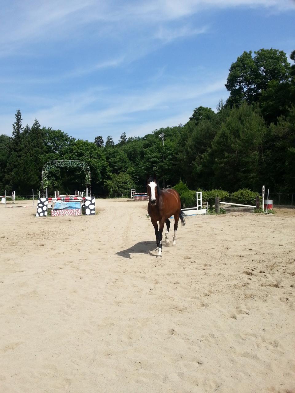 放牧で馬達もリラックス
