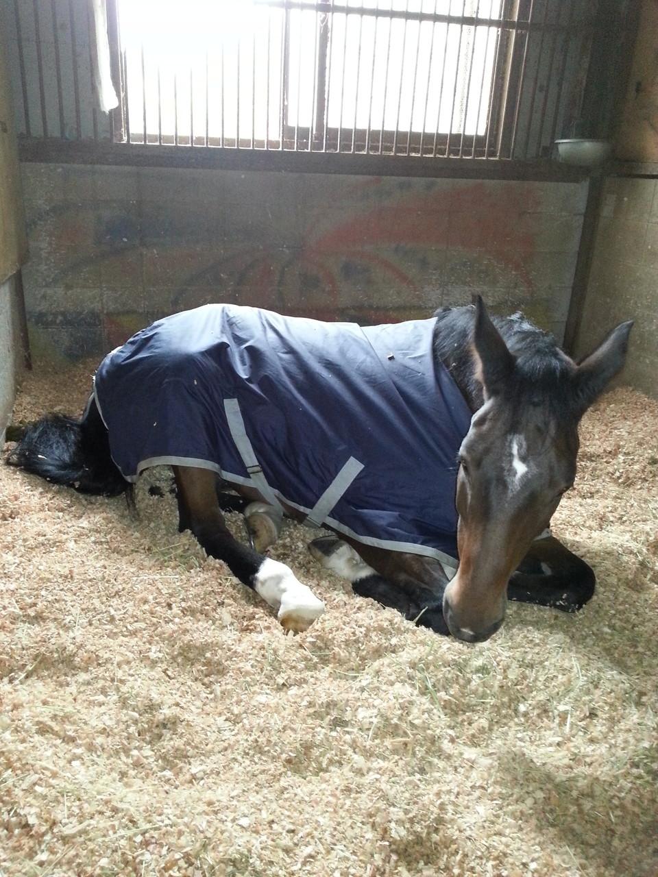 馬房内での様子 安心して眠っています