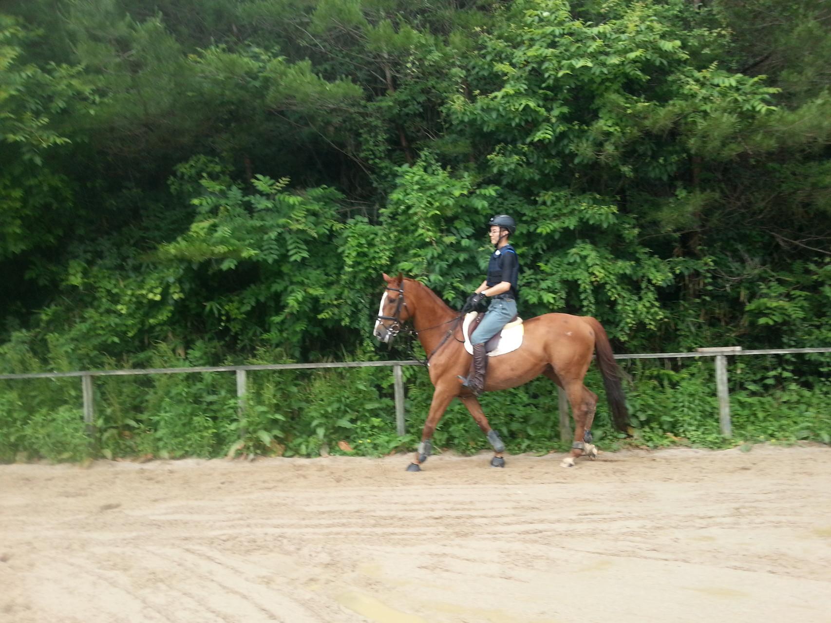 乗馬練習風景