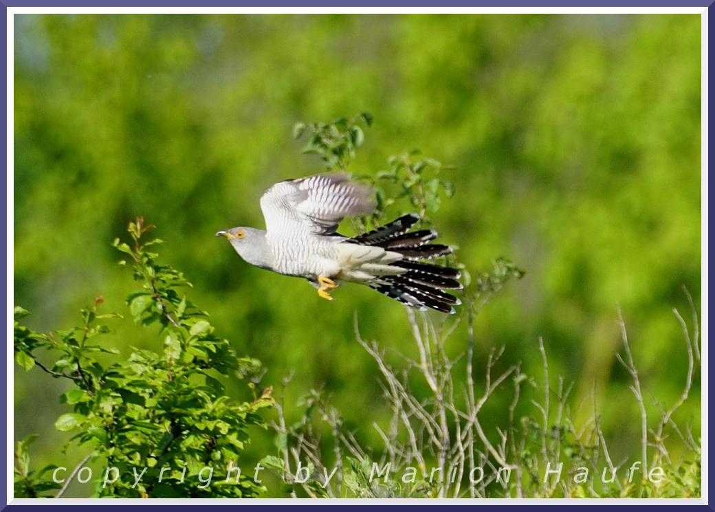 Vogelspaziergänge am Hahneberg: Im Mai