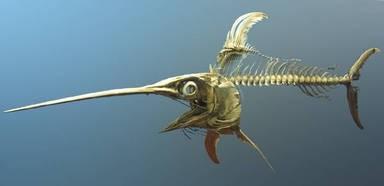 Schwertfisch-Skelett (Foto-Vorlage)