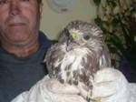 Adlerbaby gefunden in Calpe...