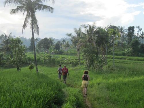 Promenade dans les rizieres en terrasse