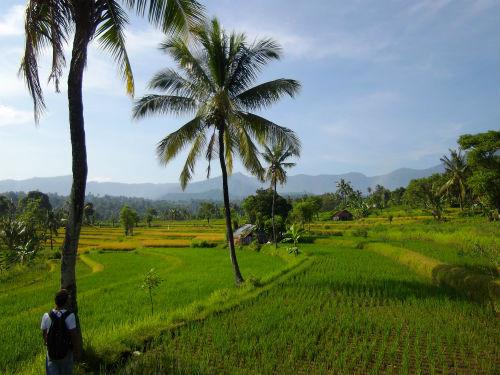 Se balader dans de belles rizieres