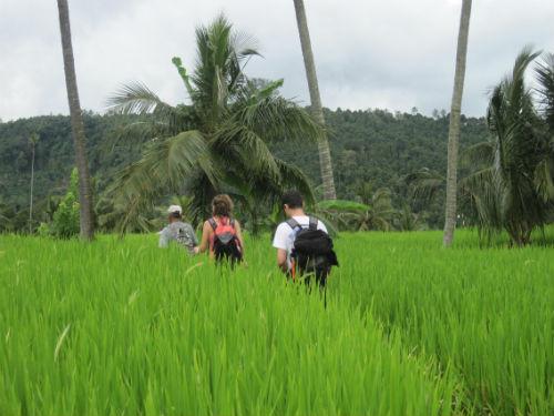 Balade au millieu des rizieres