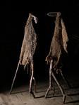 Les oiseaux de Philippe MAILLOT