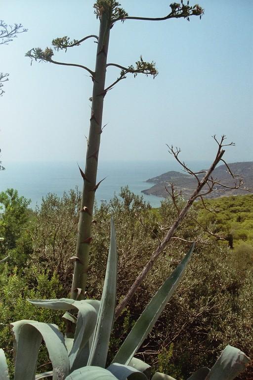 Blick auf den Saronischen Golf