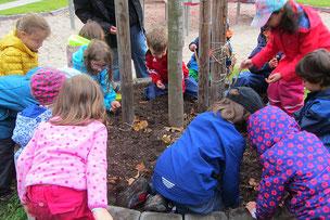 Kinder pflanzen für Bienen