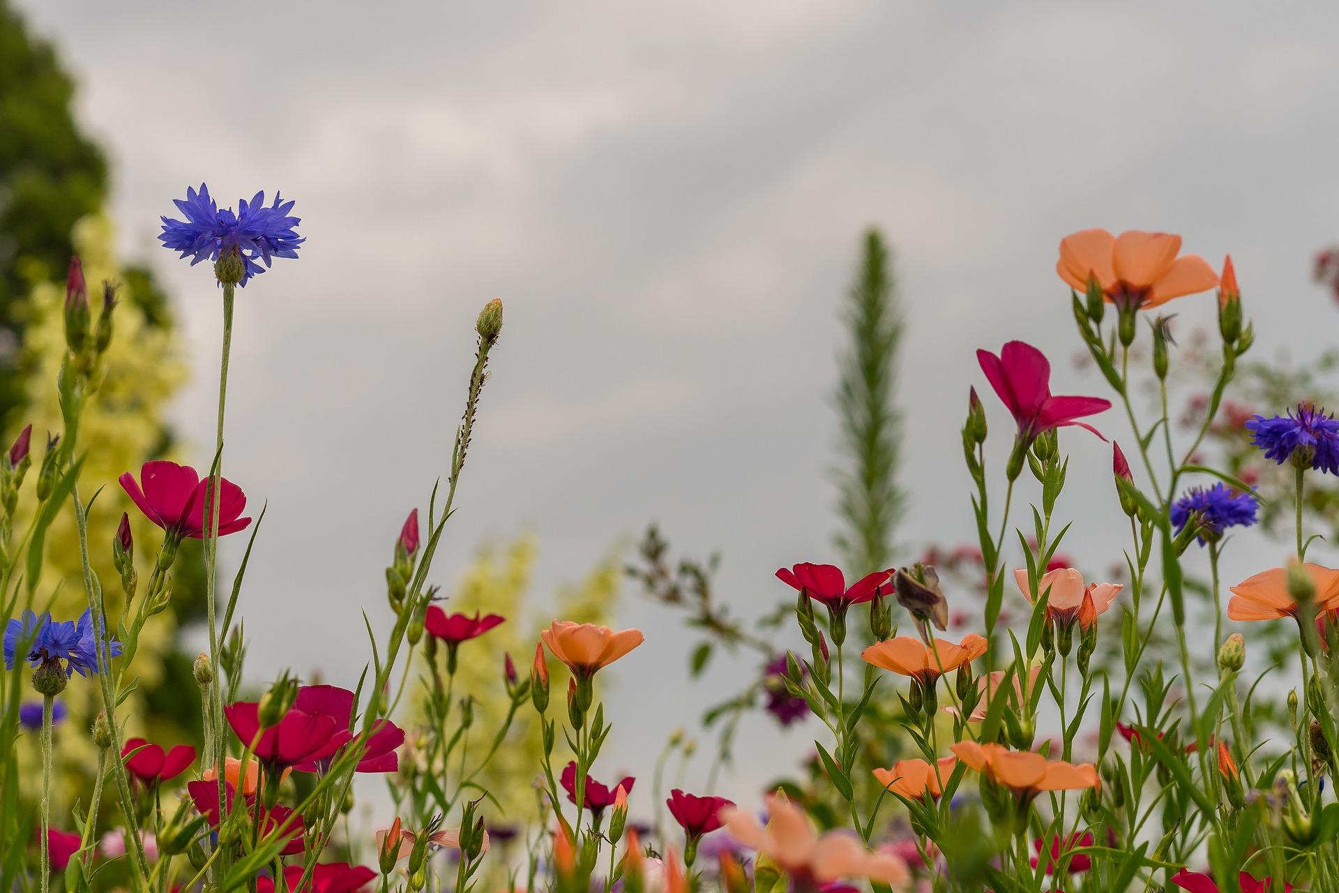 Artenreiche Bienenweide statt grüne Wüsten und Steingärten – lasst uns blühende Tankstellen schaffen