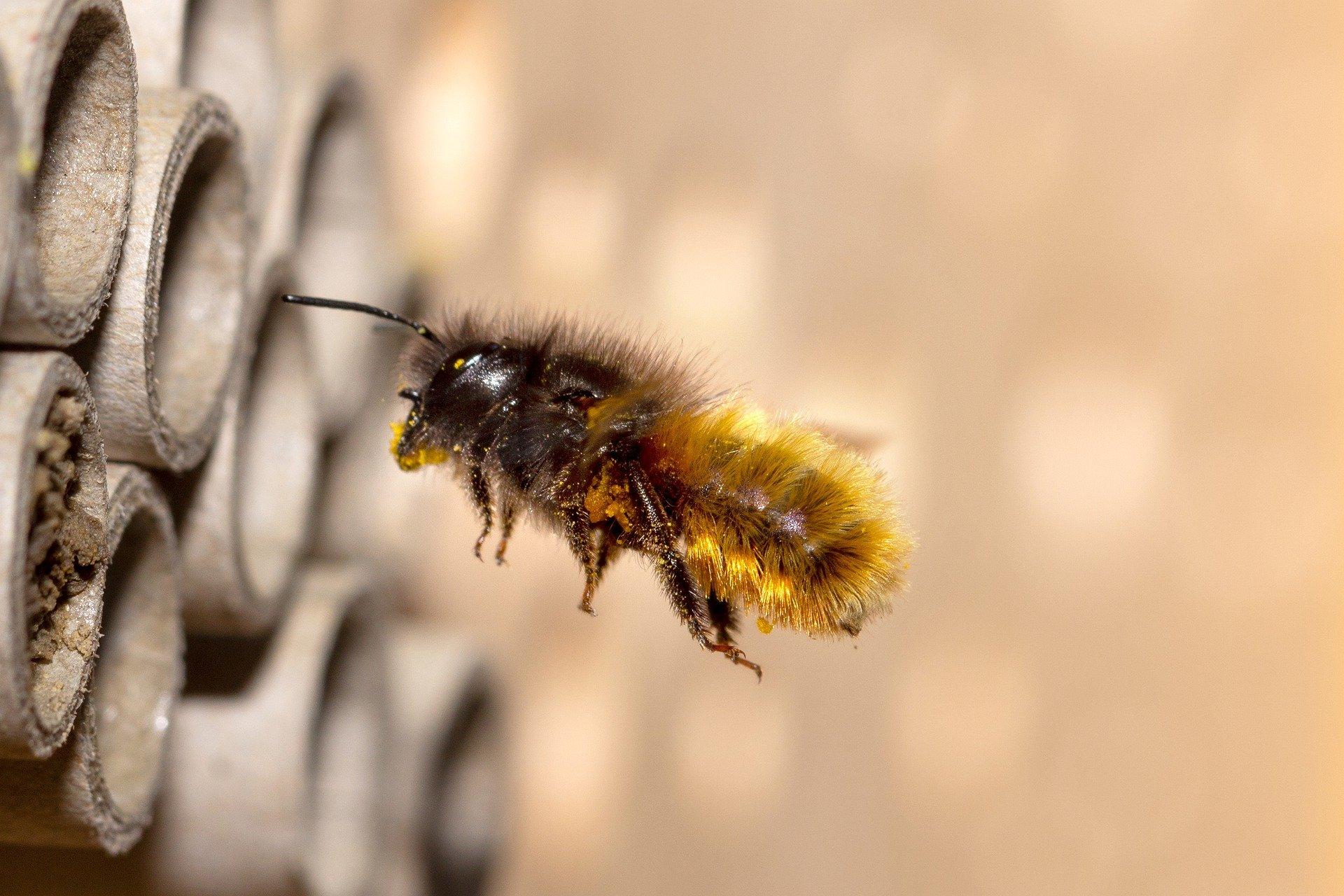 Neuer Trend Wildbienen-Kokons? – Die böse Überraschung kommt per Post