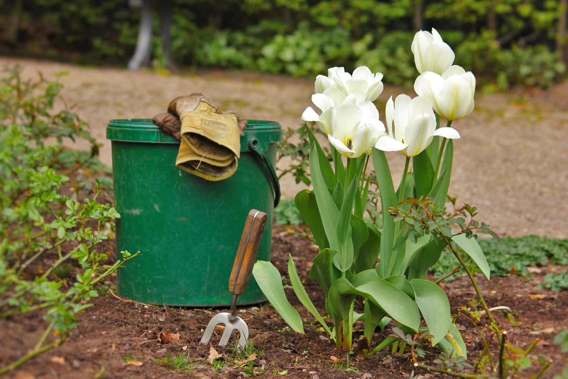 Heute ist Pflanz-eine-Blume-Tag
