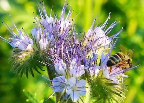 Bienenretter Bienenfreund Lass deine Stadt aufblühen
