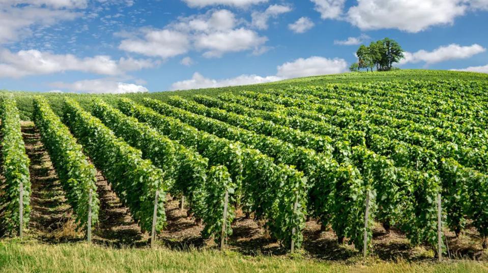 Quiz 10 : connaissez-vous ces appellations viticoles ?