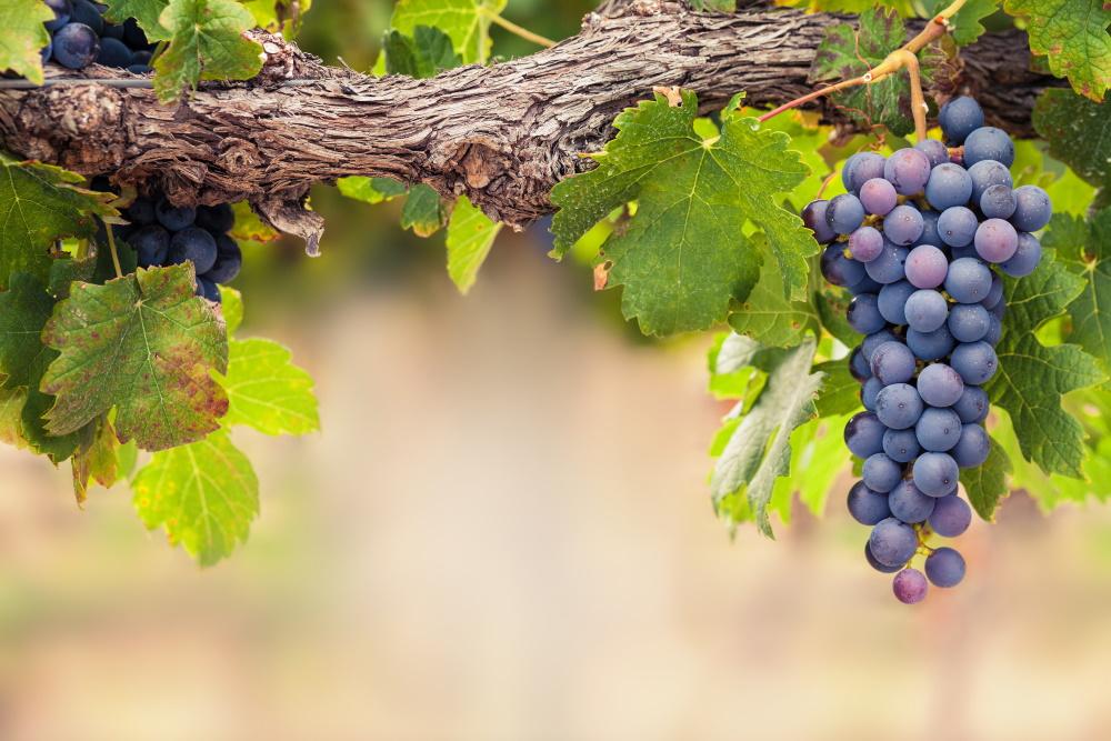 Investir son épargne dans le vin, pourquoi ?