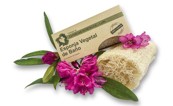 Esponjas vegetales de luffa esponjas vegetales de luffa - Esponja natural vegetal ...