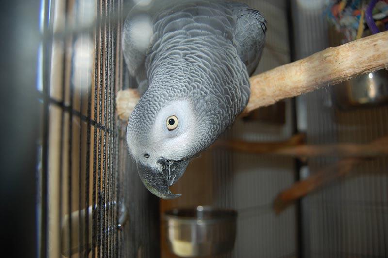 Rudi ist der Star und das Maskottchen der Tagespflege Timpe.