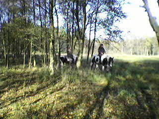 zu Pferd quer durch den lichten Wald streifen - welch ein Genuß!