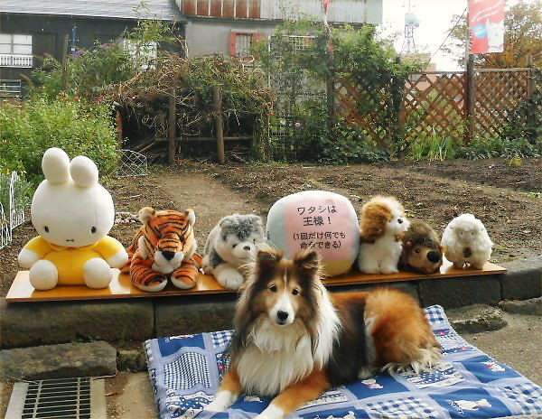 2013.11.14 (Thur) Erie is basking with dolls.