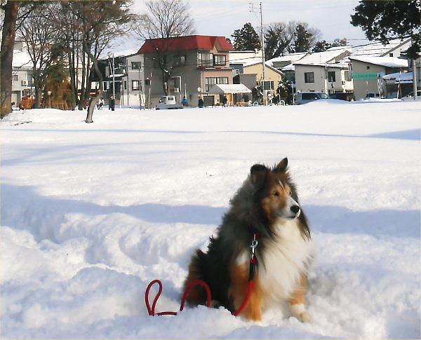 Preparation Saino-Kami on 2014.01.12 (Sun)