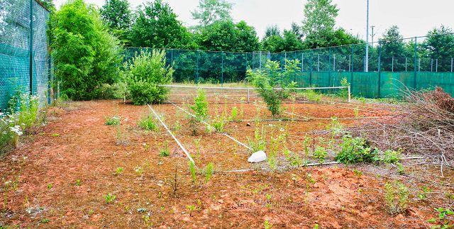 Es grünt und blüht auf den Tennisplätzen den TC Rilchingen-Hanweiler. Die Blütezeit des Vereins ist aber längst vorbei.