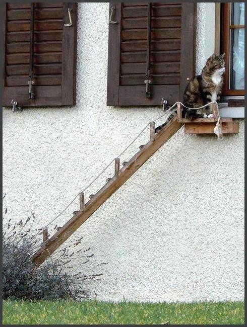 chats d 39 int rieur et enclos le chat forgeron. Black Bedroom Furniture Sets. Home Design Ideas