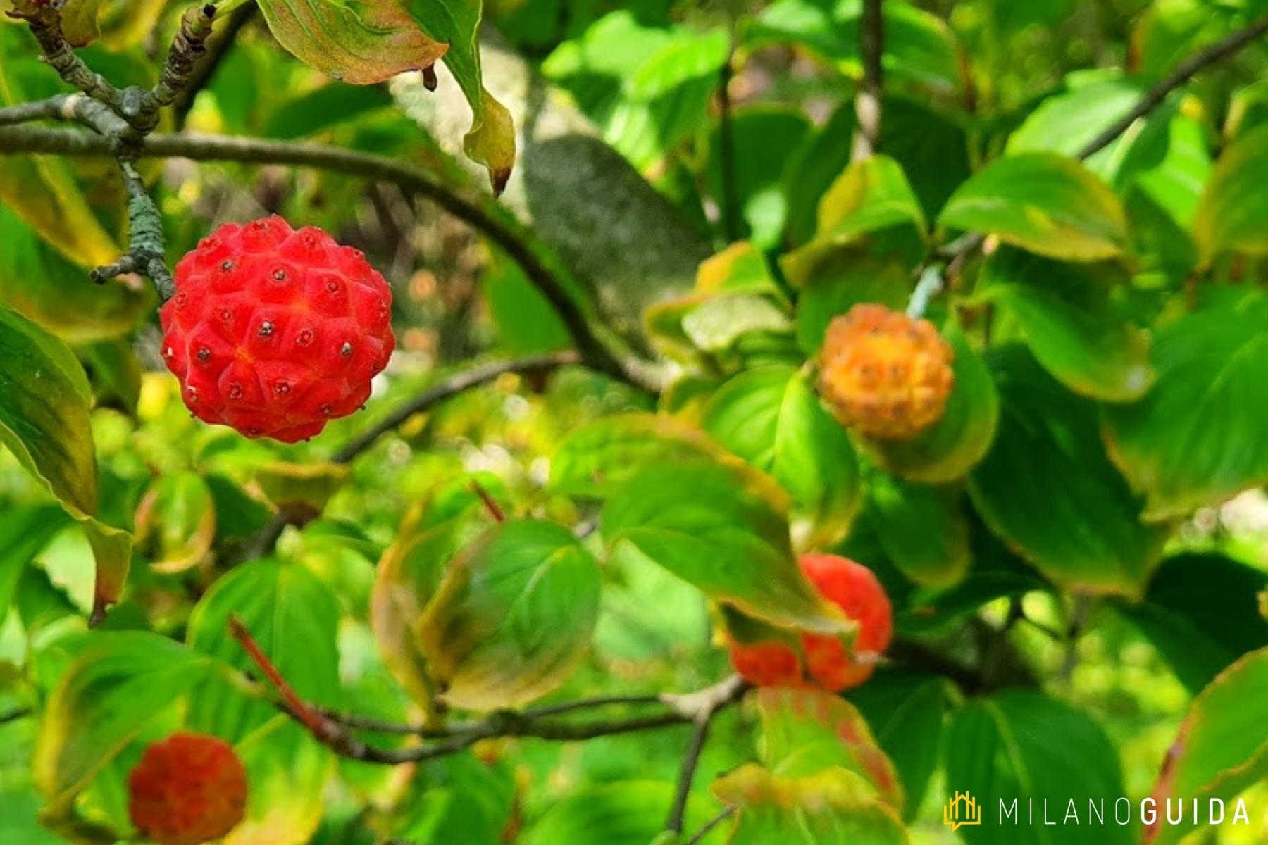 Visita botanica Storie segrete degli Alberi Parco Sempione