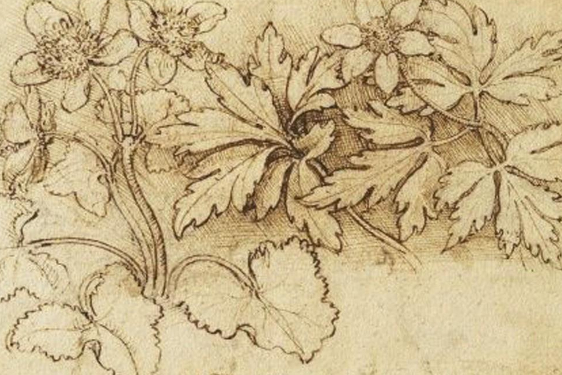 La botanica di Leonardo