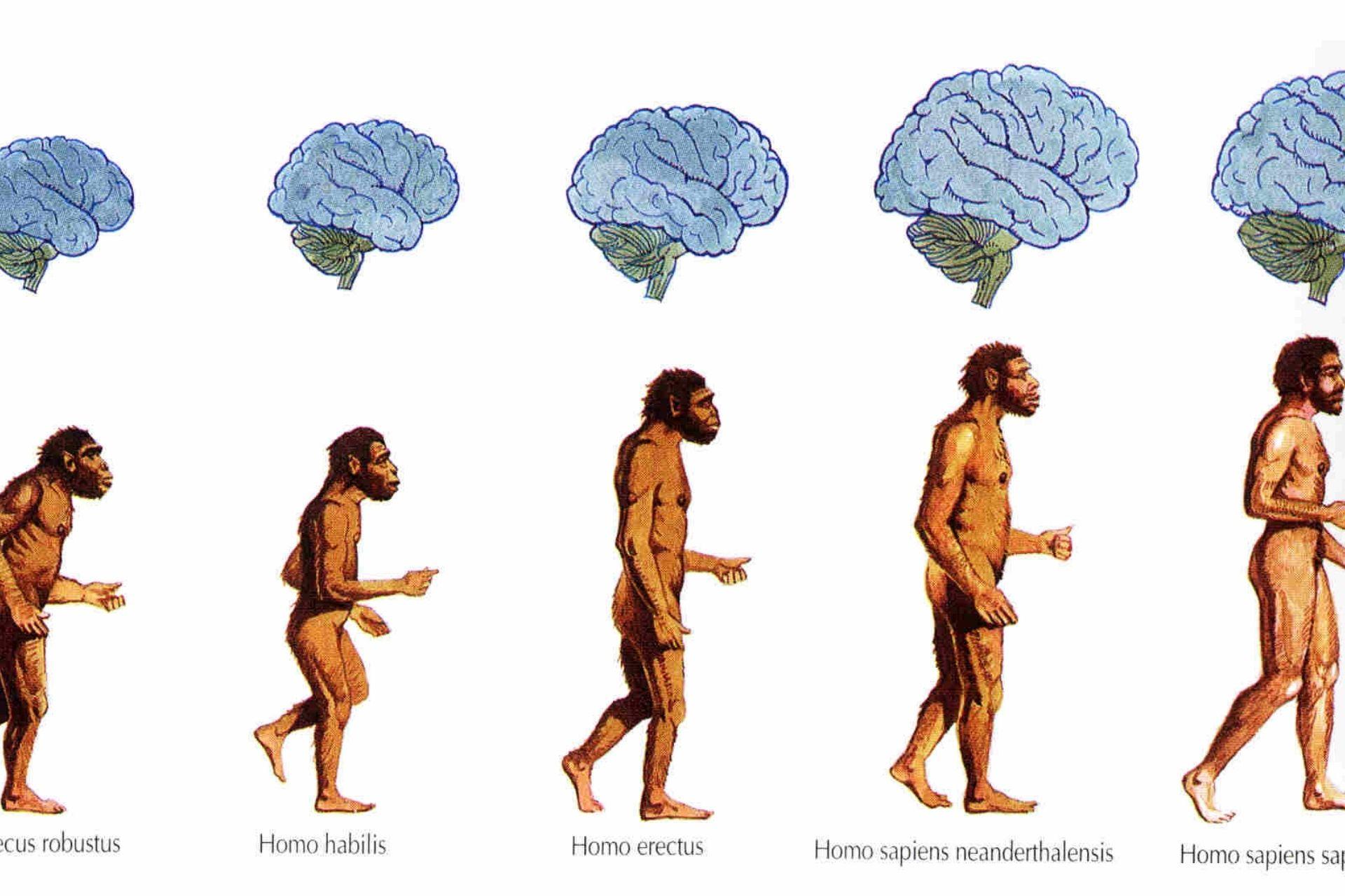 Mostra Homo Sapiens Milano