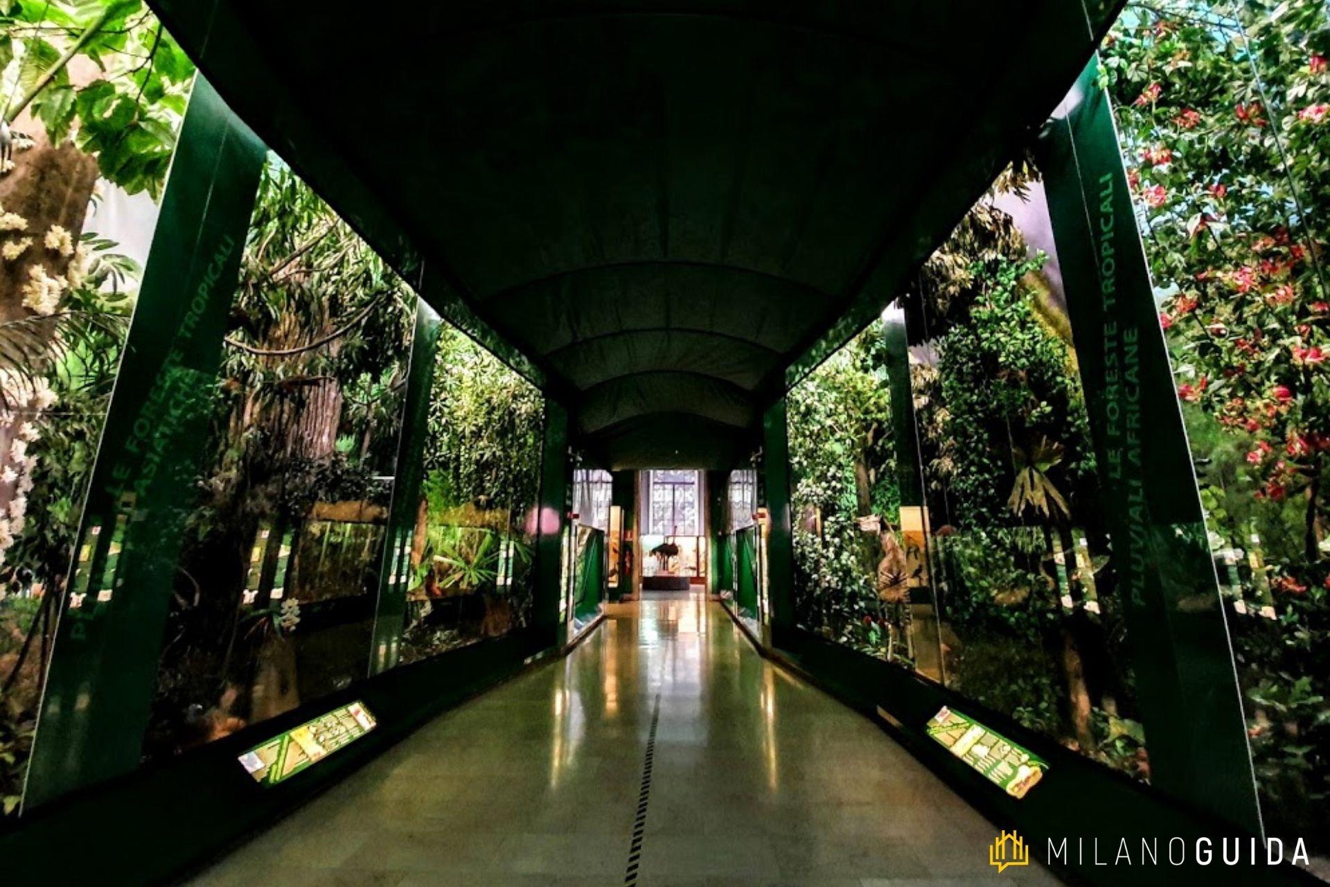 Museo di Storia Naturale Milano per bambini
