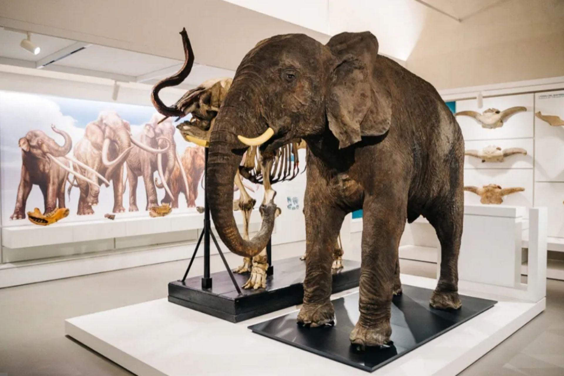 Visita guidata Museo Kosmos Pavia