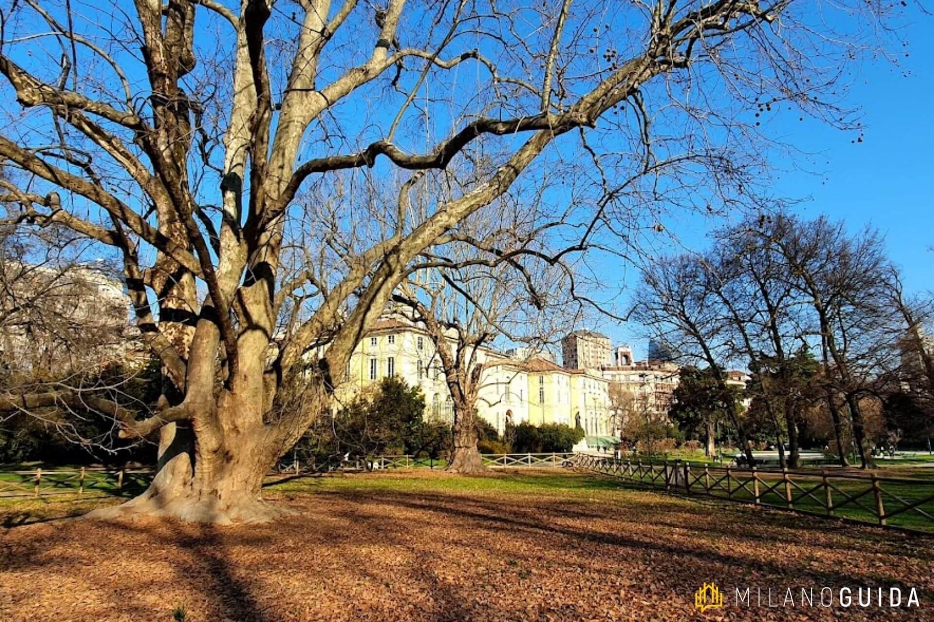 Cammino degli alberi giardini pubblici