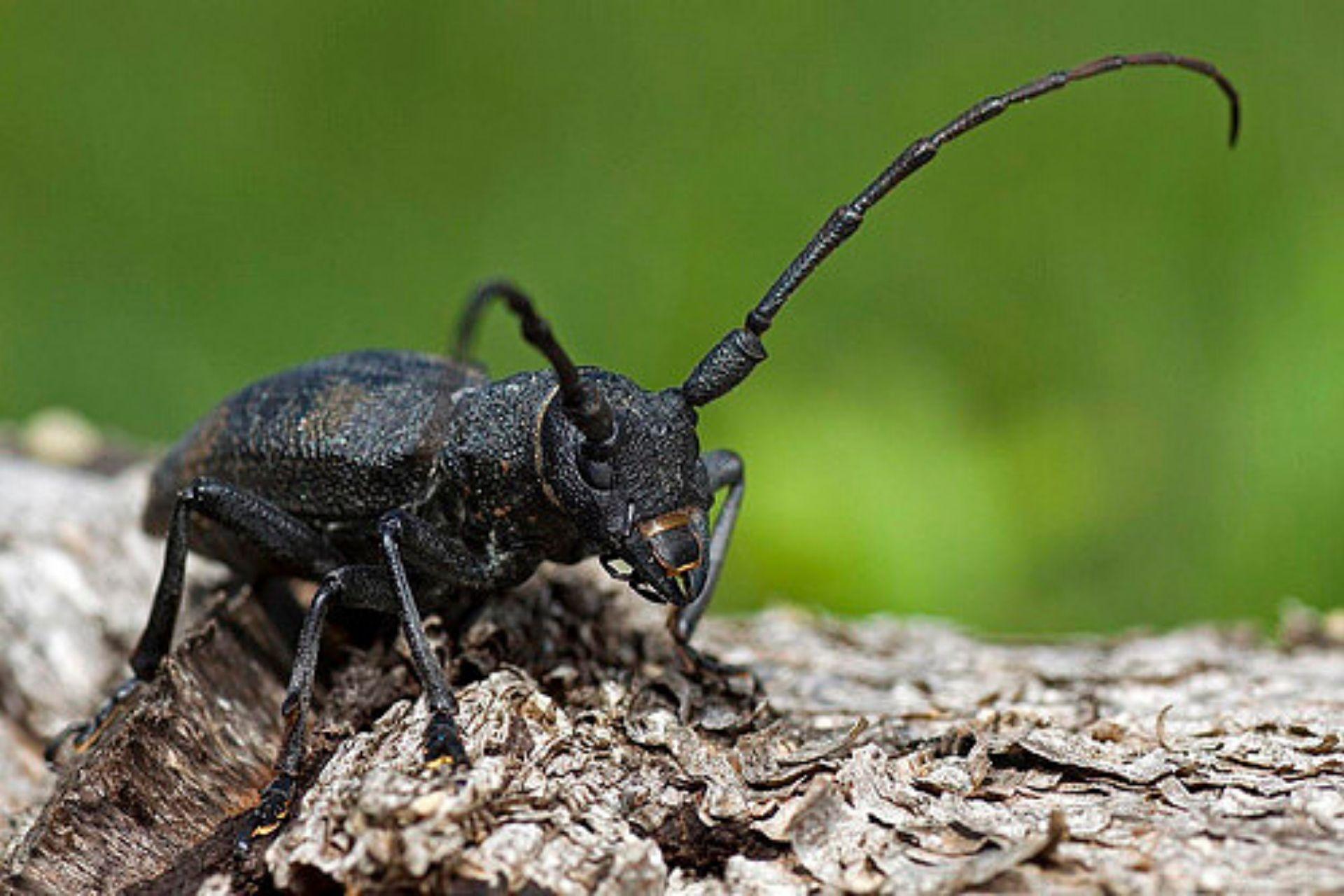 Visita guidata mondo insetti