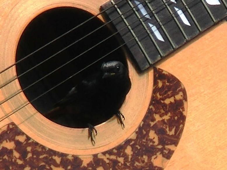 musikalische Rotschwänzchen