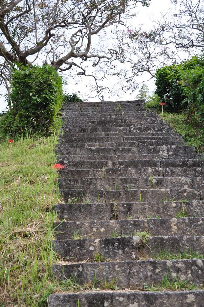 昔、この石段の両脇に、見事な彼岸花が見られたが・・・。