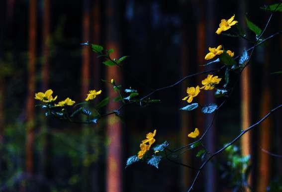この杉木立の中にも・・・